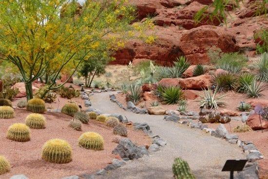 Desert-Garden-and-Yard