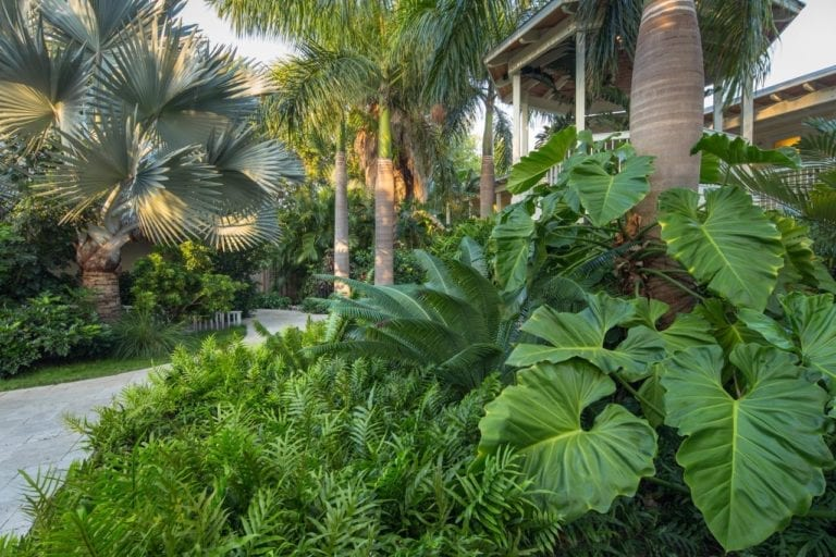 Tropical Garden and Yard